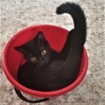 Черная кошка, 11 месяцев, Ярославль