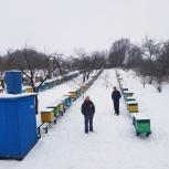 Продаются пчелопакеты, Ярославль